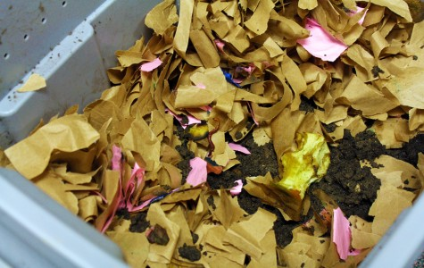 Worms Eat My Garbage: APES teacher worm composts to help environment