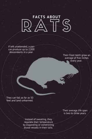 RAT FACTS