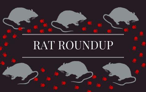 Rat Roundup