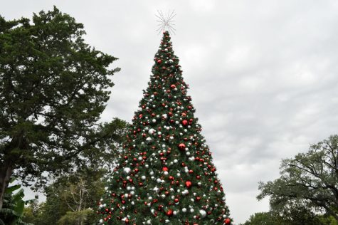Christmastime at the Arboretum