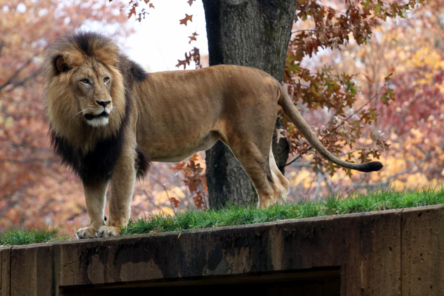 National Zoo continues effort to conserve animals
