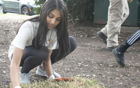 Photo Gallery: StuCo annual Reverchon Park clean up
