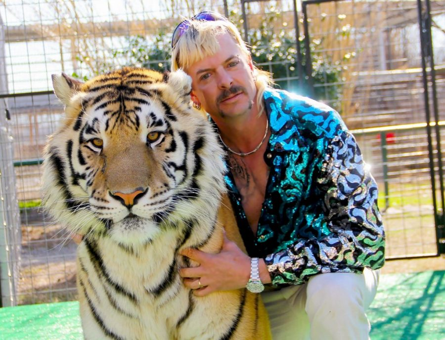 Joe Exotic posing with one of the tigers within his park. Joe is currently facing 22 years in prison for attempting to solicit murder.