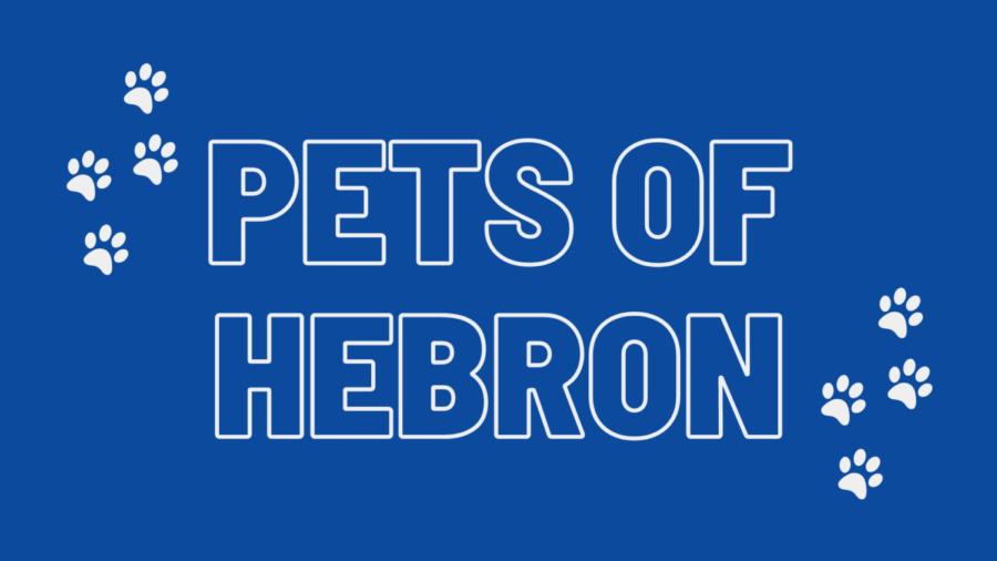 Pets of Hebron
